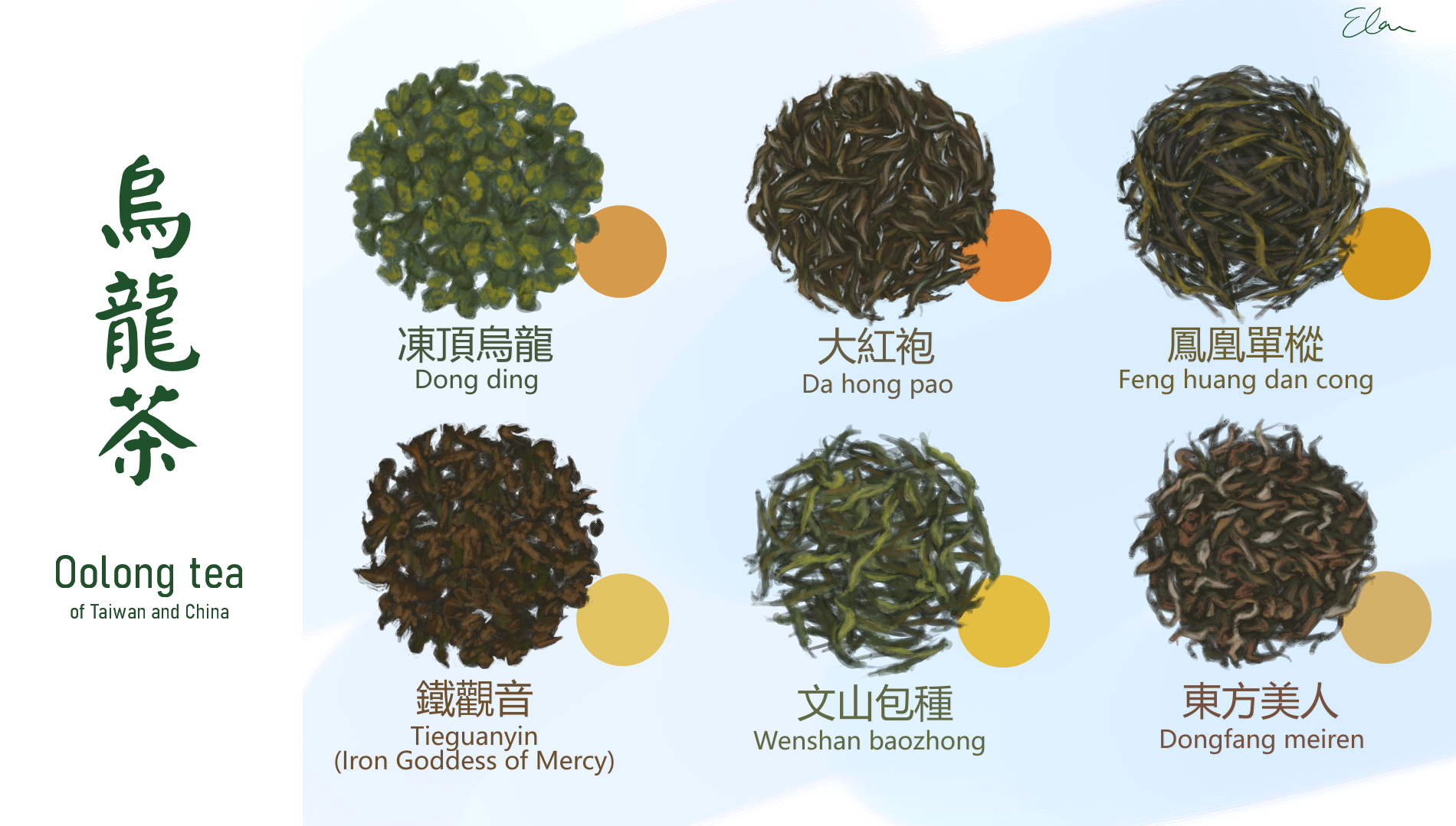 Photo of paintings of various types of tea